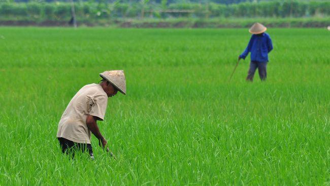 BPS: Upah Buruh Tani Naik Jadi Rp51.598 per Hari per Orang