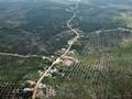 Menteri Siti Khawatirkan Nasib Taman Nasional Tesso Nilo