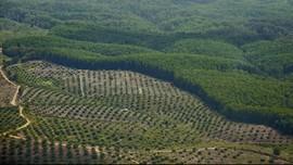 Koalisi LSM Polisikan Kementerian Agraria soal Data HGU