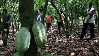 Cerita 'Pahit' di Balik Manisnya Cokelat
