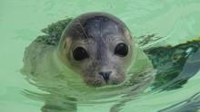 Enam Bayi Anjing Laut Tanpa Kepala Ditemukan di Selandia Baru