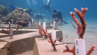 Pemanasan Global Ancam Ketahanan Pangan Hingga Ekosistem