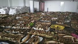 Singapura Larang Penjualan Domestik Gading Gajah Mulai 2021