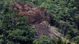 Korindo Bantah 'Menggunduli' Hutan Papua