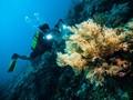 'Beli' Wakatobi, Dapat Buton dan Sulawesi Tenggara
