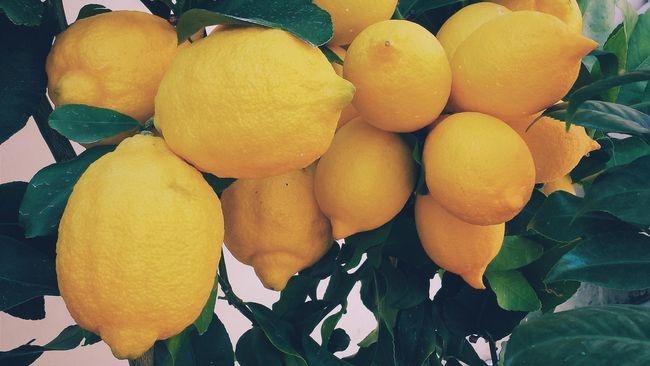 Bukan Uang, Lemon Jadi Simbol Orang Kaya di Roma