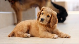Tingkatkan Sistem Imun Bayi dengan Anak Anjing