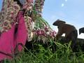 Wacana Impor Pangan Kembali Menguat Berkat El Nino
