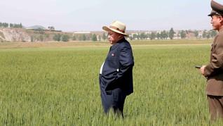 Kekeringan, Warga Korut Terancam Makan Rumput Lagi
