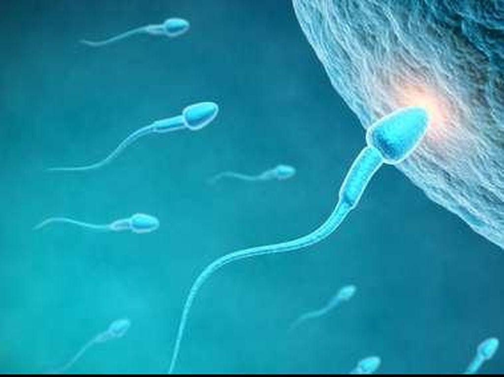 Serba-serbi Sperma