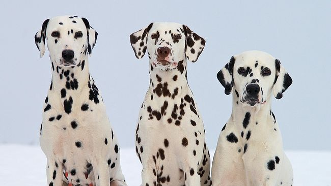 7 Hotel Ramah Anjing di Asia