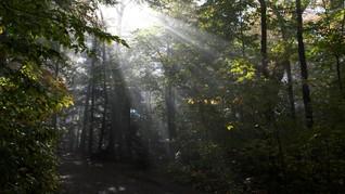 Tiga Negara Turun Tangan Membangun Hutan Kalimantan