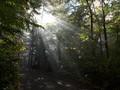 Arenillas Forest, Cagar Biosfer 'Dua Kewarganegaraan'