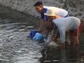 Kontaminasi Tinggi, Pasar Water Purifier Diproyeksi Tumbuh 5%