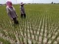 BKPM Kantongi Komitmen Investasi Pertanian Rp 56 Triliun