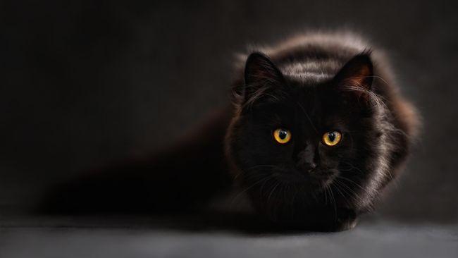 Polisi Periksa 4 Pemuda Cekoki Kucing dengan Ciu