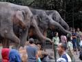 Kenekatan Turis Timur Tengah di Taman Safari Cisarua