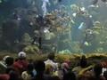 Bakal Ada Akuarium Raksasa di Teluk Kendari