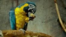 Jumlah Spesies Burung di Indonesia Naik Jadi 1.794