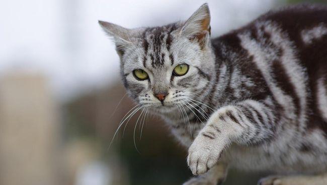 Kisah Louie, Kucing Buta yang Jadi Selebgram