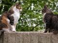 Destinasi Wisata untuk Pecinta Kucing di Seluruh Dunia