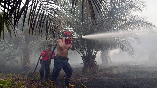 Industri Sawit Terpukul Dua Kali Akibat Kebakaran Hutan