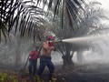 Greenomics: Kebakaran Hutan Berlangsung Sampai Maret 2016