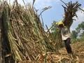 BUMN Buka Wacana Petani Tebu jadi Pemegang Saham Pabrik Gula