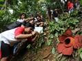 Agam, 'Surga' Bunga Rafflesia di Indonesia