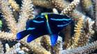 Kepulauan Togean Jadi Habitat Ratusan Spesies Laut Dilindungi
