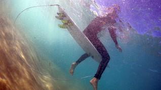 Satu Pria Tewas Diserang Hiu di Australia