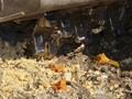 Rusia Hancurkan 470 Ton Keju Selundupan