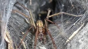Sebuah Pantai di Yunani Diselimuti Sarang Laba-laba