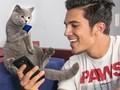 Aaron's Animal, Video Aksi Kucing yang Kocak