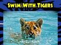 Kebun Binatang Dikecam karena Tawaran Berenang dengan Harimau