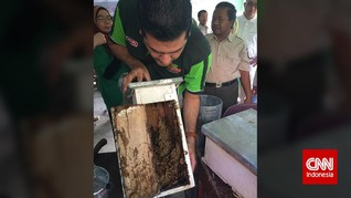 Mengejar Lebah Penghasil Propolis di Pedalaman Sumatera Utara