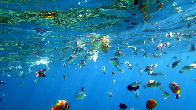 Menyelami 'Istana Dewa' Di Bawah Laut Bali