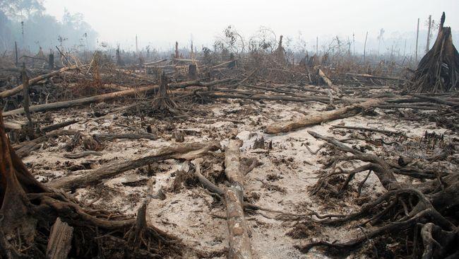 Bank Global Dituding Turut Rusak Hutan Asia Tenggara