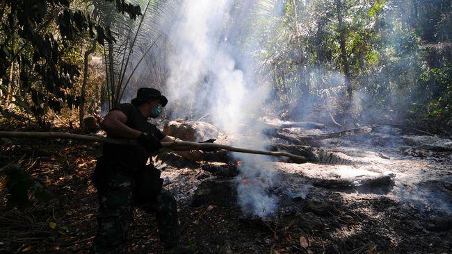 Peneliti LIPI: Hutan Indonesia Tak Bisa Terbakar Alami