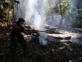 Jokowi Masukkan Perusahaan Pembakar Lahan ke Daftar Hitam