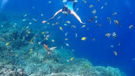 Pengalaman Bawah Laut yang Menakjubkan