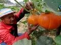 Petani Sukabumi Mulai Jual Online Sayur dan Buah