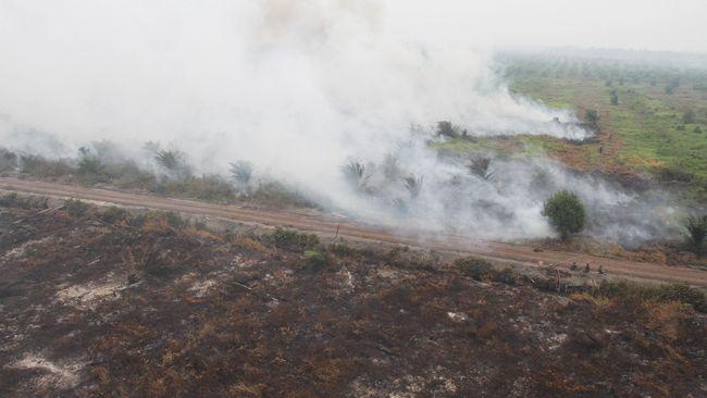 Kebakaran Hutan, KLHK Segel Area Milik 5 Perusahaan di Kalbar