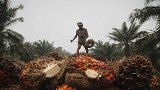 KPK Temukan 63 Ribu Wajib Pajak Industri Sawit Kemplang Pajak