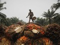 Polda Riau: Pertemuan dengan Bos Sawit Tidak Direncanakan