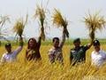 Mentan Dorong Produksi Beras Organik Agar Petani Untung Besar