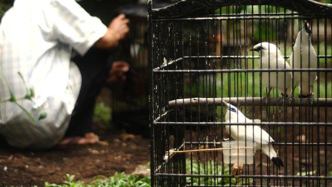 PLTU Ancam Rusak Taman Nasional dan Pantai di Bali