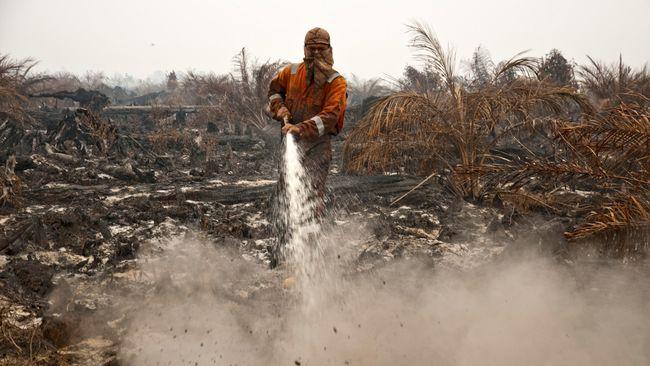 Atasi Kebakaran Hutan, Gapki Desak Revisi UU Lingkungan Hidup
