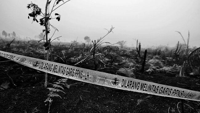 Polri: Tujuh Korporasi Asing Tersangka Pembakar Hutan