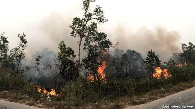 Pemerintah Gugat Tiga Perusahaan Pembakar Hutan di Sumsel